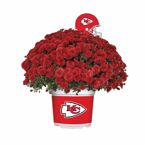 Sporticulture Kansas City Chiefs Team Color Potted Mum Perspective: front