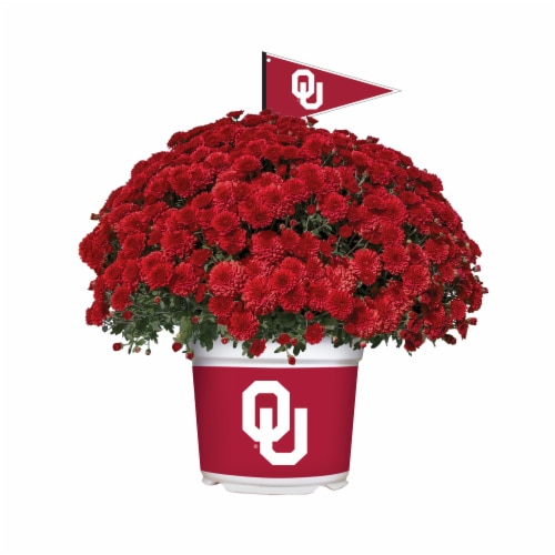 Sporticulture Oklahoma Sooners Team Color Potted Mum Perspective: front