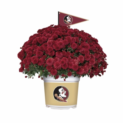 Sporticulture Florida State Seminoles Team Color Potted Mum Perspective: front
