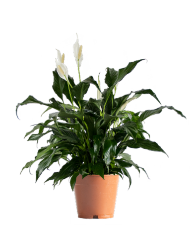 Premium Assorted Foliage Perspective: front