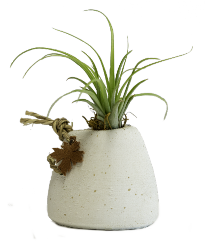 Rustic White Potted Succulent Perspective: front