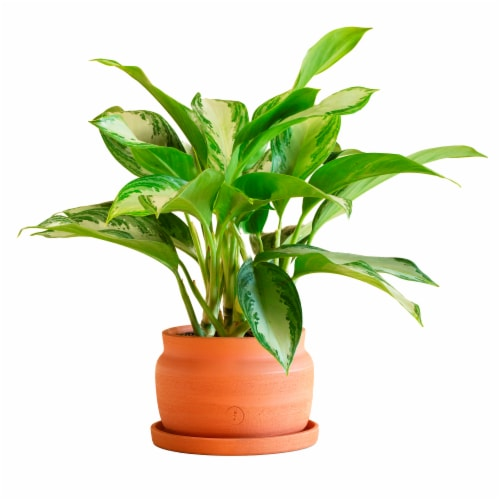 Large Free Form Potted Plant Perspective: front