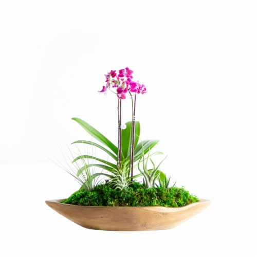LiveTrends Paradise Orchid Garden (Approximate delivery is 2-5 days) Perspective: front