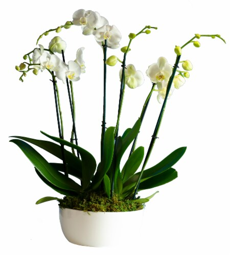 LiveTrends Deluxe Orchid Garden (Approximate delivery is 2-5 days) Perspective: front