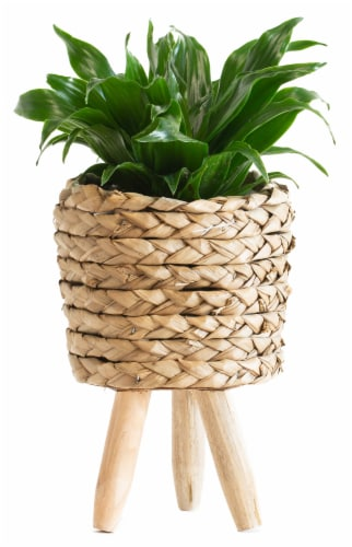 LiveTrends Dracena Woven Basket (Approximate delivery is 2-5 days) Perspective: front