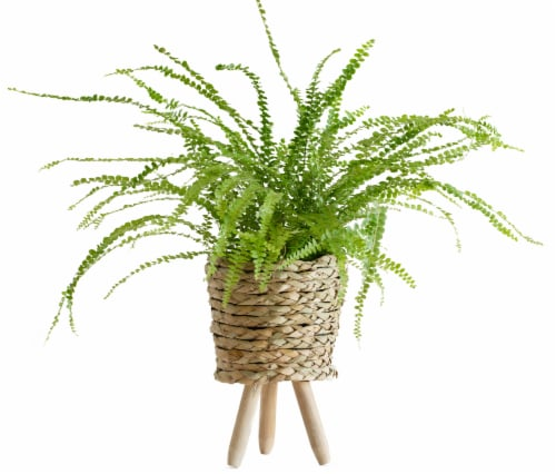 LiveTrends Lemon Button Fern Woven Basket (Approximate delivery is 2-5 days) Perspective: front