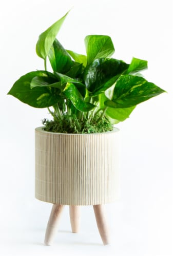 LiveTrends Bamboo Basket Small - Pothos (Approximate delivery is 2-5 days) Perspective: front