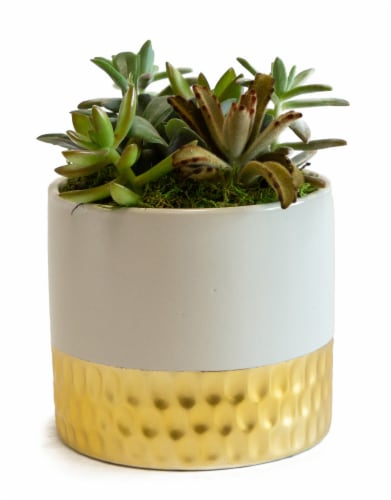 LiveTrends Succulent Garden - Gold/White (Approximate delivery is 2-5 days) Perspective: front
