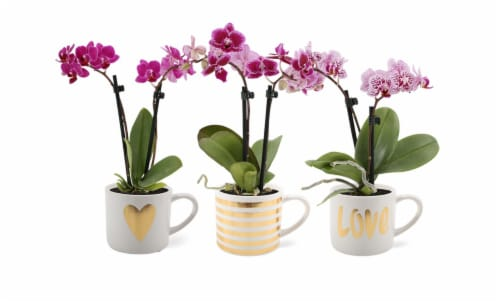 Love Mug Orchid Perspective: front