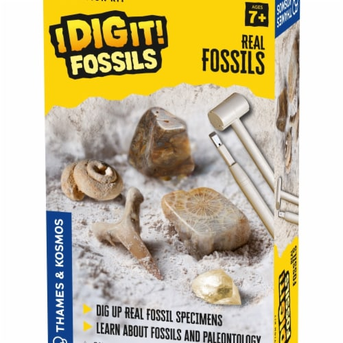 Thames & Kosmos  I Dig It Fossils Real Fossils Excavation Kit Perspective: front