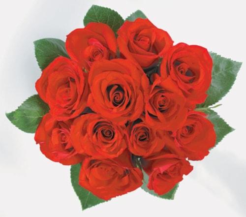 Dozen Roses Perspective: front