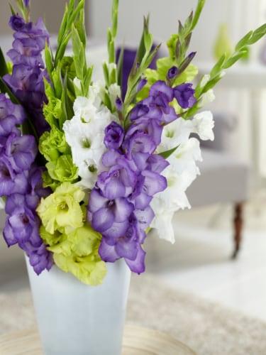 Bloomsz Gladiolus Gemstones Of The Garden Bulb Blend (15 pack) Perspective: front