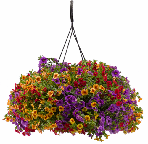 Confetti™ Hawaiian Luau Hanging Flower Basket Perspective: front