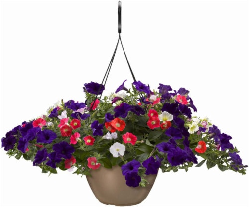 Wave Petunia Flag Hanging Basket Perspective: front