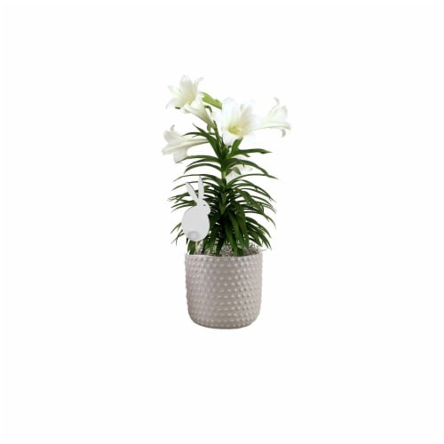 Easter Lily in Hobnail Ceramic Pot Perspective: front