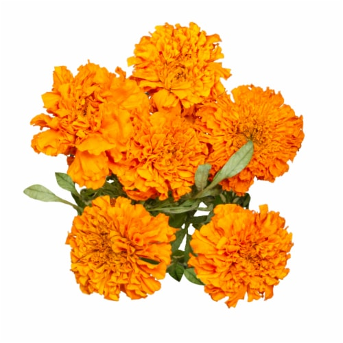 Marigold Perspective: front