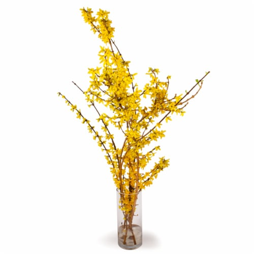 Forsythia Perspective: front