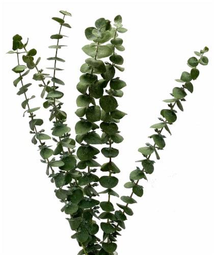 Eucalyptus Assortment Perspective: front
