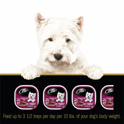 Cesar Porterhouse Steak Flavor Classic Loaf in Sauce Wet Dog Food Perspective: left