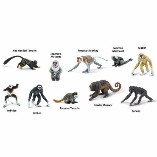Primates TOOB Perspective: left