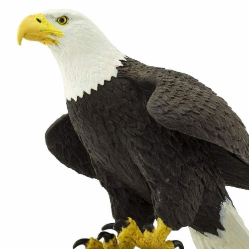 Bald Eagle Perspective: left