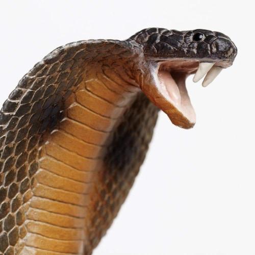 Cobra Perspective: left