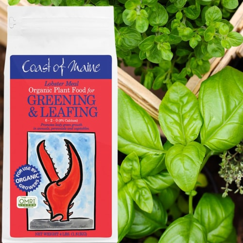 Coast of Maine Lobster Meal Organic Fertilizer Mix, 4 Pound Bag (2 Pack) Perspective: left