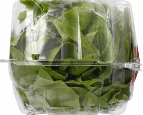Organic Butter Lettuce Perspective: left
