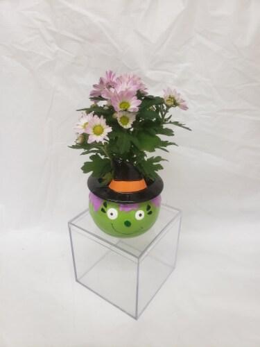 Set of 4 Miniature Plants in Halloween Ceramic Pots Perspective: left