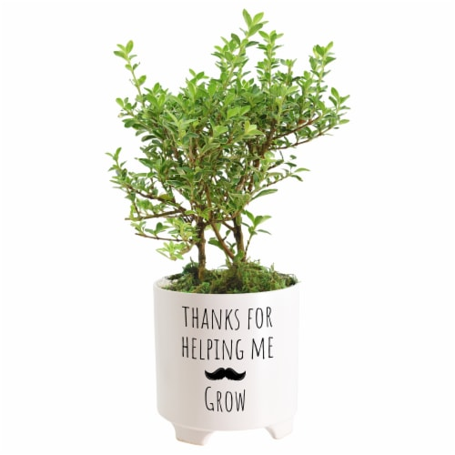Thanks For Helping Me Grow Father's Day Mustache Medium Bonsai - Assorted Perspective: left