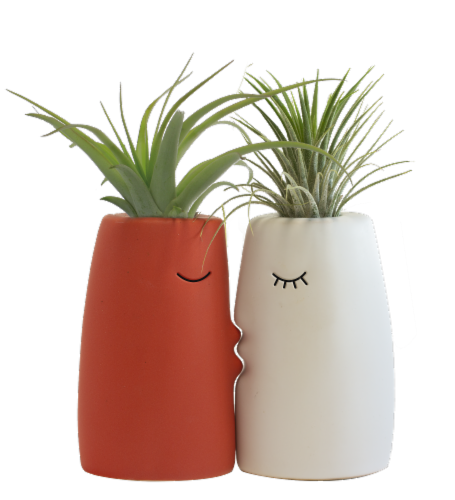 LiveTrends Kiss Me Potted Plants - 2 Pack - Assorted (Approximate Delivery is 2-5 Days) Perspective: left