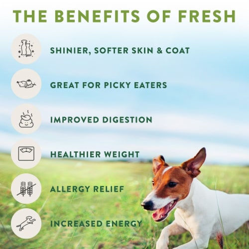 Freshpet Select Chunky Beef Recipe Slice & Serve Roll Dog Food Perspective: left