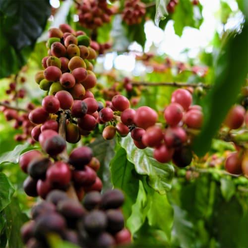 3-19 Coffee Dali Blend Dark Roast Ground Coffee Perspective: left