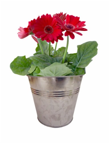 Blooming Plant in Tin Potted Plant - Assorted Perspective: left