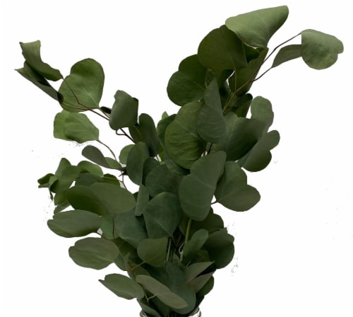 Eucalyptus Assortment Perspective: left