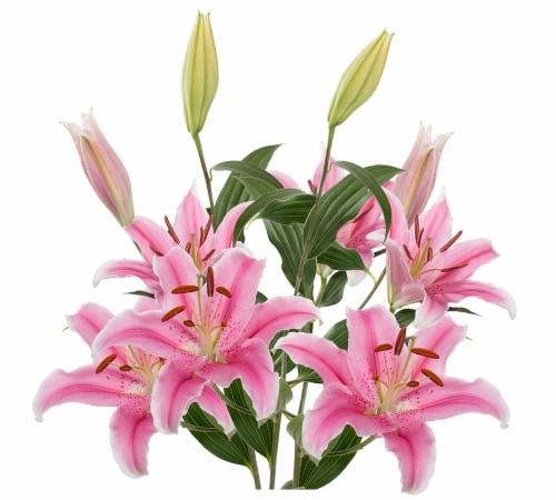 Bloom Haus Assorted Longiflorum Asiatic Hybrid Lilies Perspective: right