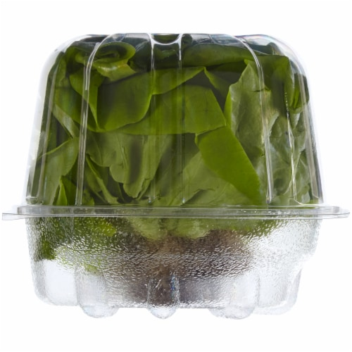 Simple Truth Organic™ Living Butter Lettuce Perspective: right
