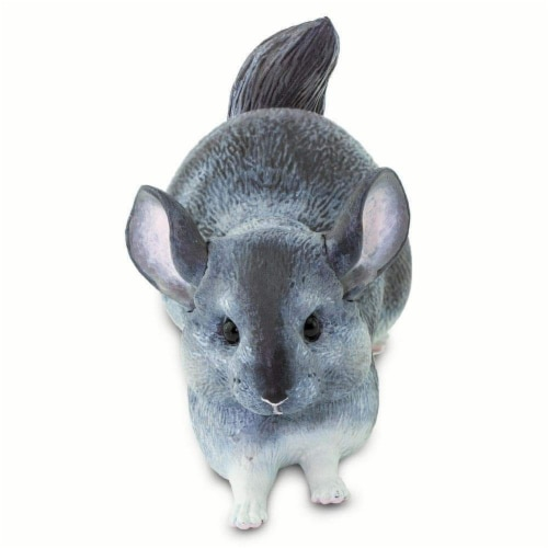 Chinchilla Perspective: right