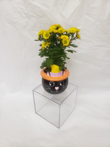 Set of 4 Miniature Plants in Halloween Ceramic Pots Perspective: right