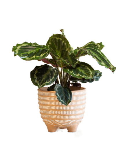 Large Boho Potted Plant - Assorted Perspective: right