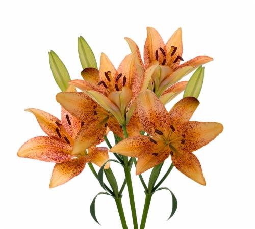 Tango-LA´s Lily Box Perspective: right