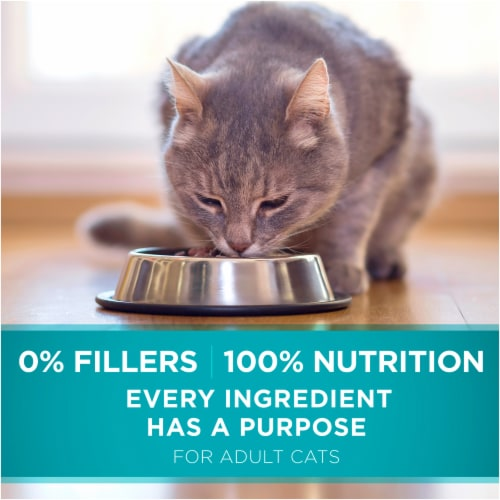 Purina ONE Tender Selects Blend with Real Salmon Natural Dry Cat Food Perspective: top