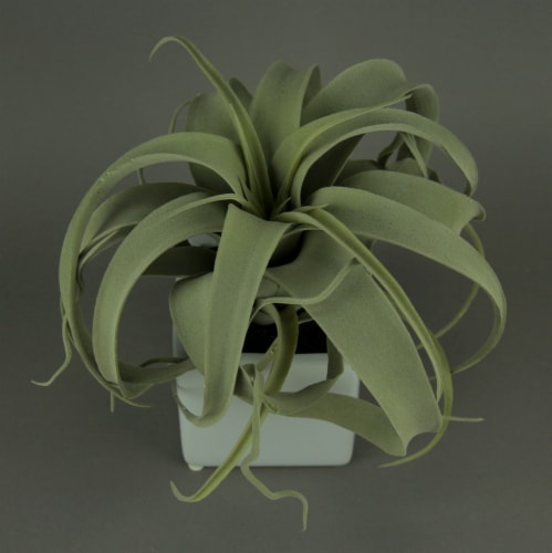 Artificial Air Plant in Decorative Cement Planter 10 inch Perspective: top