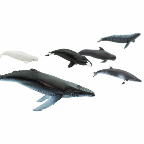Whales TOOB Perspective: top