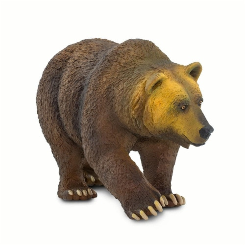 Grizzly Bear Perspective: top