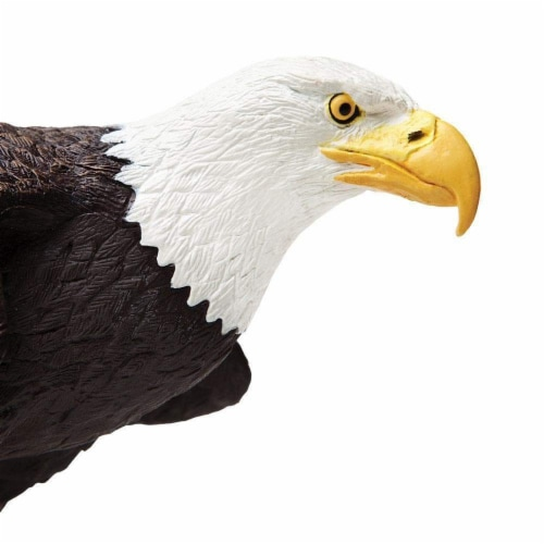 Bald Eagle Perspective: top
