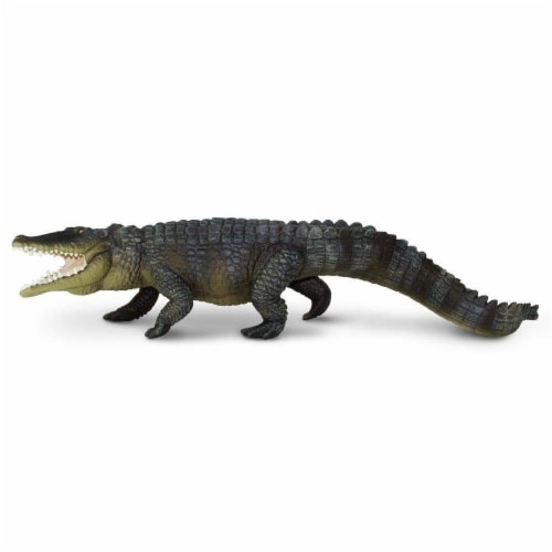 Saltwater Crocodile Perspective: top