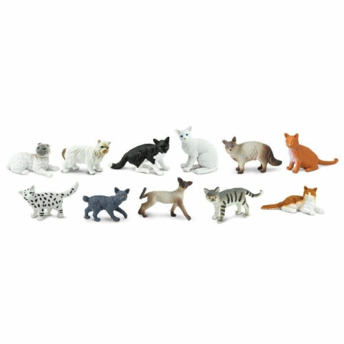 Domestic Cats TOOB Perspective: top