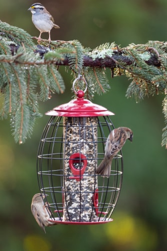 Stokes Select Sweet Tweet Cafe Caged Tube Bird Feeder - Red Perspective: top