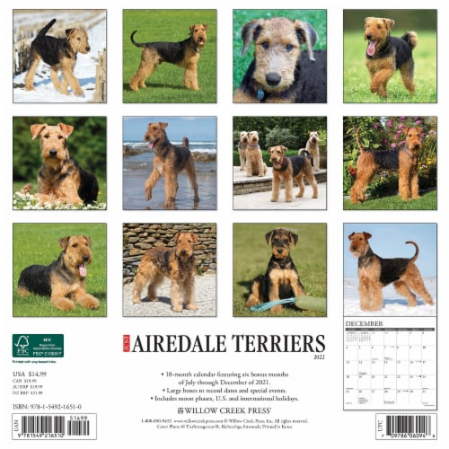 Just Airedale Terriers 2022 Wall Calendar (Dog Breed) Perspective: top